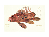 Fish, from group of color lithographs of fishes animals, 1830. Prints