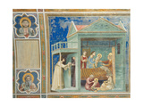 Life of the Virgin, The Birth of the Virgin Prints by  Giotto di Bondone