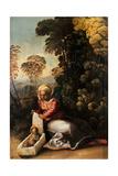 Madonna with Child (La Zingarella) Prints by Dosso Dossi