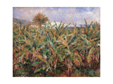 Field of Banana Trees Giclee Print by Pierre-Auguste Renoir