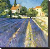 Lavender Fields Stretched Canvas Print by Philip Craig