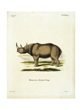 Rhinoceros from group of color lithographs of African animals, 19th c. Prints