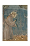 Preaching to the Birds Prints by  Giotto di Bondone