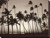 Platinum Palms I Stretched Canvas Print by Michael Neubauer