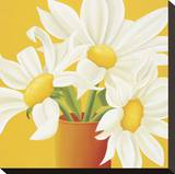 Sunny Daisies Stretched Canvas Print by Sarah Horsfall