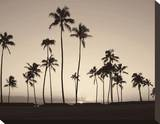 Platinum Palms II Stretched Canvas Print by Michael Neubauer