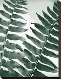 Fern Detail II Stretched Canvas Print by Boyce Watt