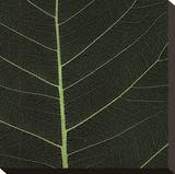 Bo Leaf I Stretched Canvas Print by Andrew Levine