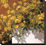 Yellow Geraniums Stretched Canvas Print by Philip Craig