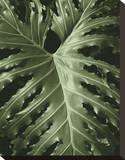 Tropica I Stretched Canvas Print by Boyce Watt
