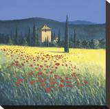 Tuscan Poppies II Stretched Canvas Print by David Short