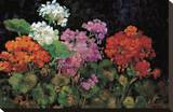Geranios en el Jardin Stretched Canvas Print by J. Ripoll