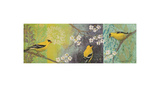 Goldfinches Blooming Prints by Margaret Donharl