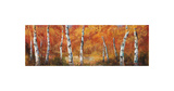 Autumn Birch I Posters by Art Fronckowiak