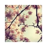 Pink Blossoms Kunstdrucke von Irene Suchocki