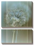 Flaura II Prints by W. Blake