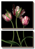 Parrot Tulips II Poster by Andrew Levine