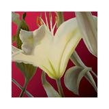 Lily Red Poster by Jan McLaughlin