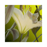 Lily Green Prints by Jan McLaughlin