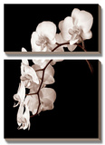 Orchid Dance II Posters by John Rehner