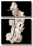 Orchid Dance I Prints by John Rehner