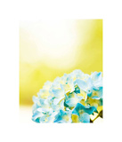 Hydrangea Prints by Carolyn Cochrane