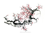 Plum Blossom Branch III Posters by Nan Rae