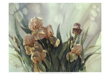 Hadfield Irises II Prints by Clif Hadfield