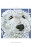 Bubbles - Stella Affiches par Dlynn Roll
