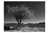 Start Spring Tree Print by Nish Nalbandian