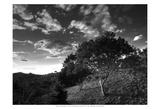 Evening Jungle Trees Prints by Nish Nalbandian