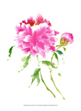 Peonies in Pink I Prints by Nan Rae