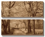 Smokies Road Prints by Wendy Caro