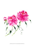 Peonies in Pink III Prints by Nan Rae