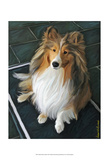 Sheltie Bred to Bark Art by Robert Mcclintock