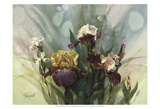 Hadfield Irises VI Prints by Clif Hadfield