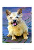 Cairn Terrier Print by Robert Mcclintock