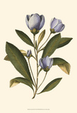 Lavender Floral IV Prints by  Vision Studio