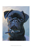 Pug Baby Blue Posters by Robert Mcclintock