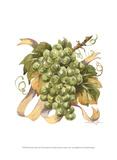 Watercolor Grapes II Art by Jerianne Van Dijk