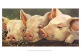 Pig Heaven Posters por Carolyne Hawley