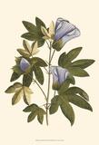Lavender Floral II Art by  Vision Studio