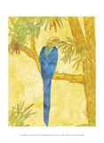 Macaw on Branch II Poster by Catherine Kohnke