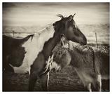 Kissing Horses II Giclee Print by David Drost