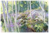 Aspen Glade Giclee Print by Julie G. Pollard
