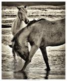 Beach Horses I Giclee Print by David Drost