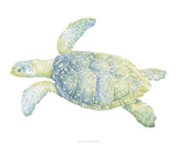 Tranquil Sea Turtle II Giclee Print by Megan Meagher