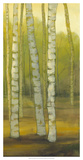 Sunny Birch Grove II Giclee Print by Julie Joy