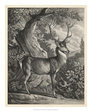 Woodland Deer I Giclee Print by  Ridinger