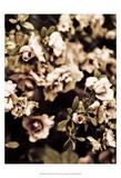 Romantic Roses II Print by Tang Ling